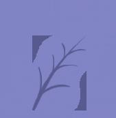 Web Development Company Australia